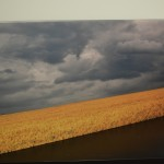 Field of Wheat GIK Acoustics ArtPanel